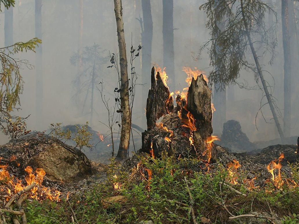 Samen natuurbrand voorkomen!